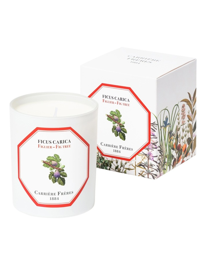 Fig Tree Candle 185 G image 1