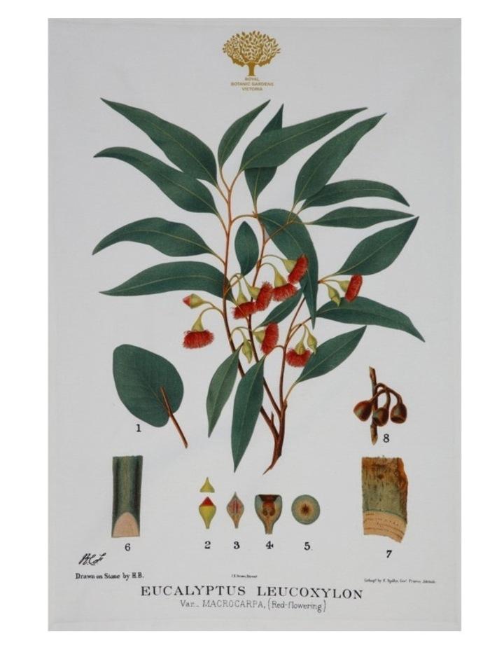 Royal Botanic Garden Tea Towel 50x70cm Gum image 1