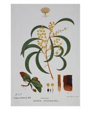 Royal Botanic Garden Tea Towel 50x70cm Wattle