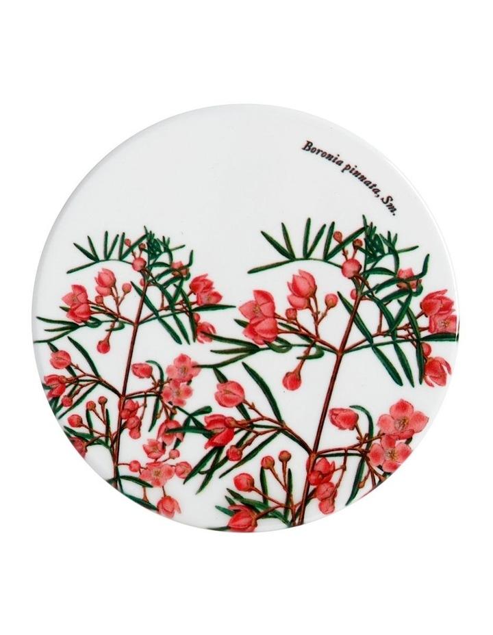 Royal Botanic Garden Ceramic Round Coaster 9.5cm Boronia image 1
