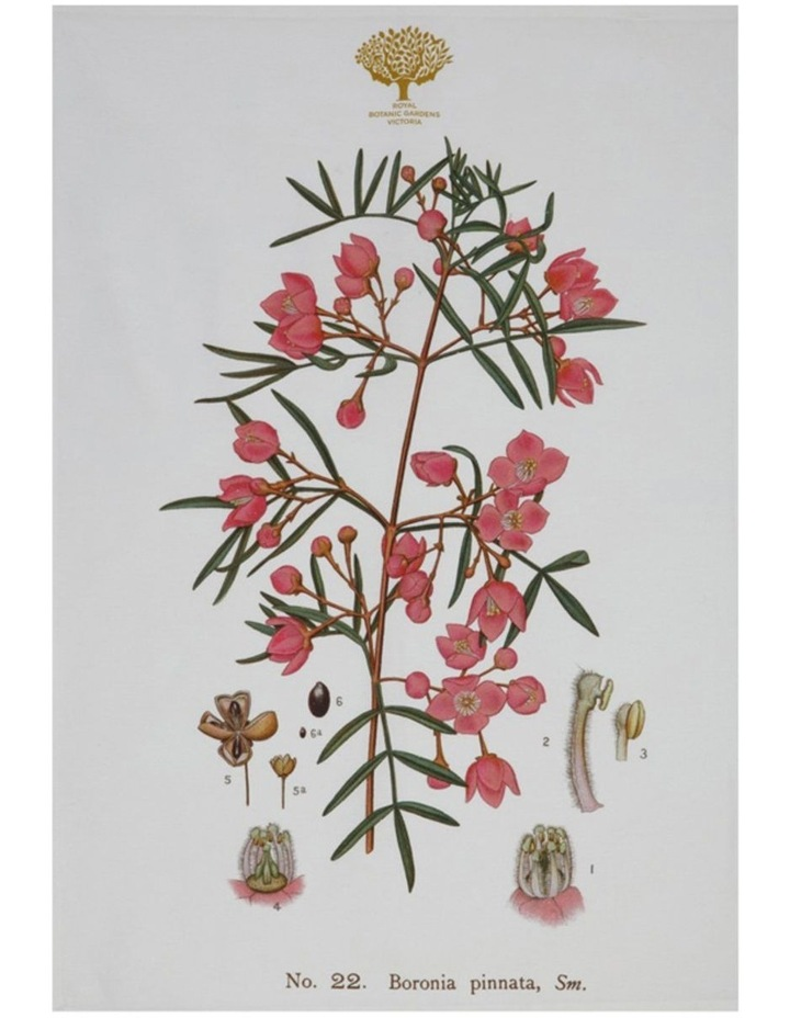 Royal Botanic Garden Tea Towel 50x70cm Boronia image 1