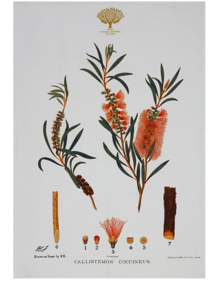 Royal Botanic Garden Tea Towel 50x70cm Bottlebrush image 1