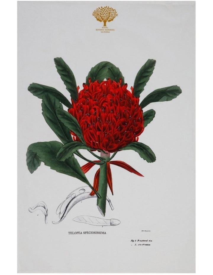 Royal Botanic Garden Tea Towel 50x70cm Telopea image 1