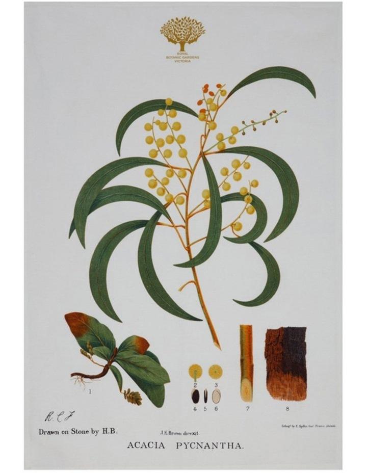Royal Botanic Garden Tea Towel 50x70cm Wattle image 1