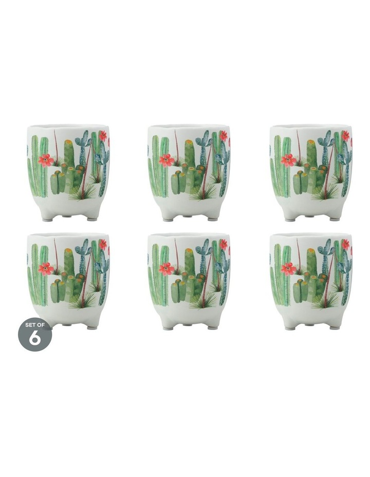 Royal Botanic Gardens Arid Garden Planter Pot 12cm Saguaro Set of 6 image 1