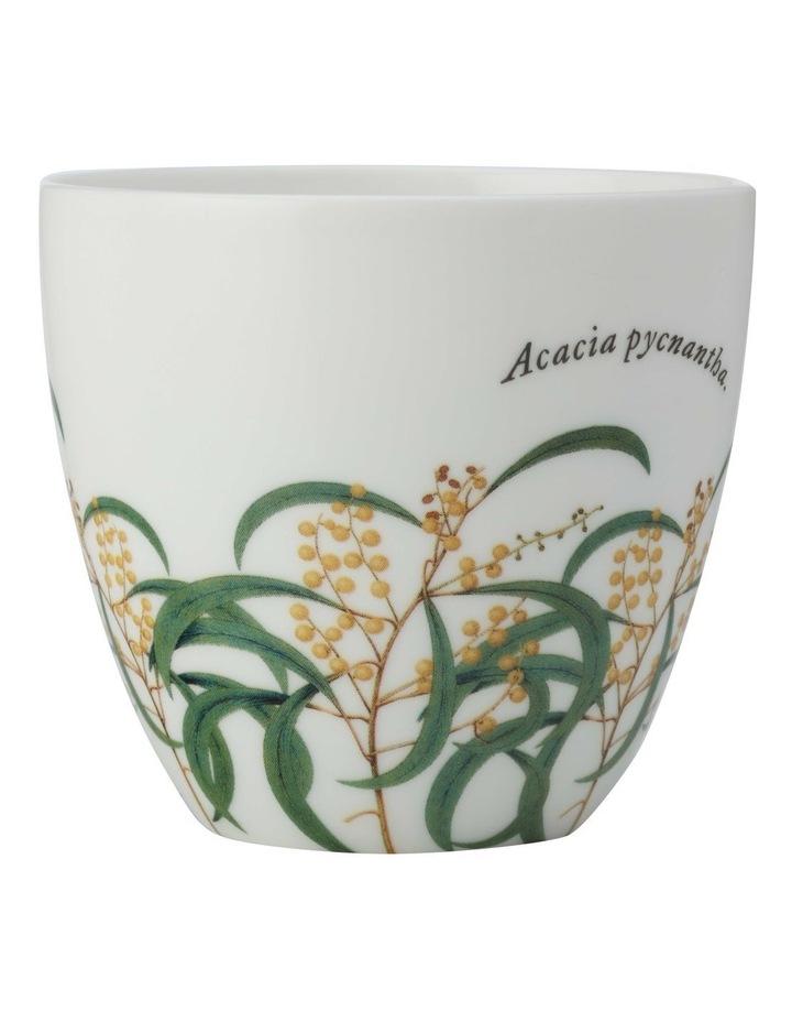 Royal Botanic Gardens Tealight Holder Wattle Gift Boxed image 1