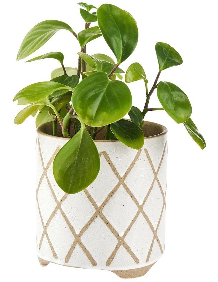 Estrada Planter Pot 12cm In White image 2