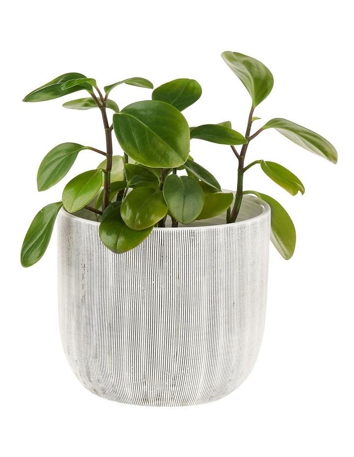TaupIn Planter Pot 19cm In White image 2