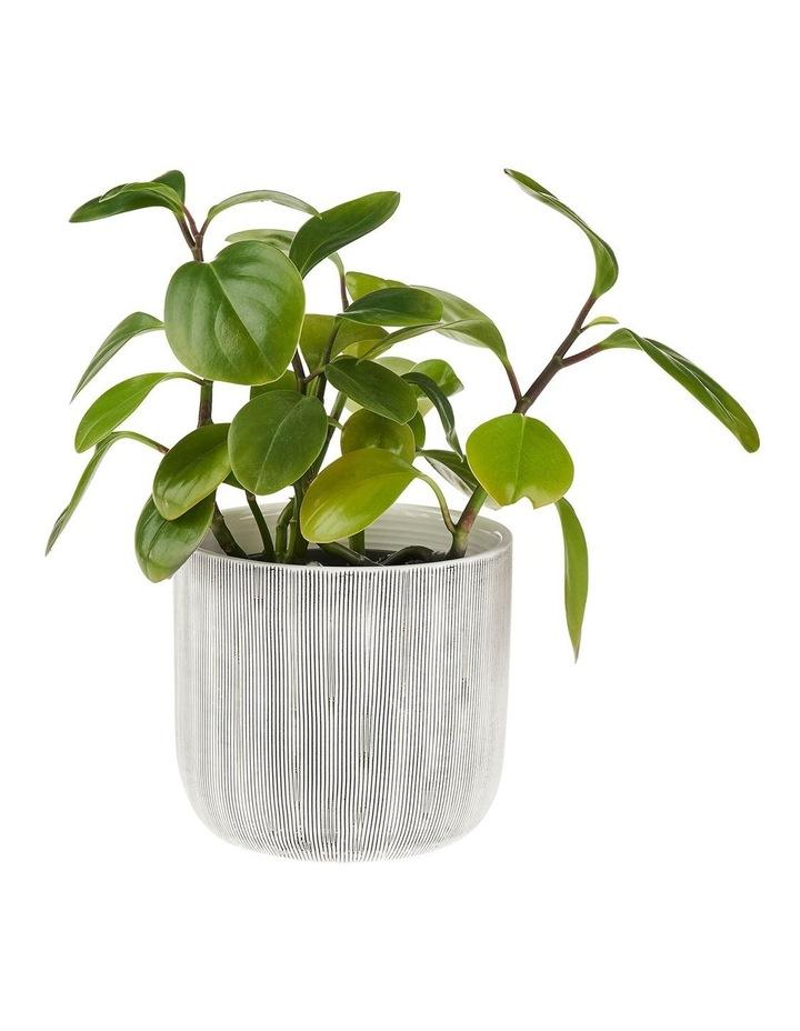 TaupIn Planter Pot 16.5cm In White image 2