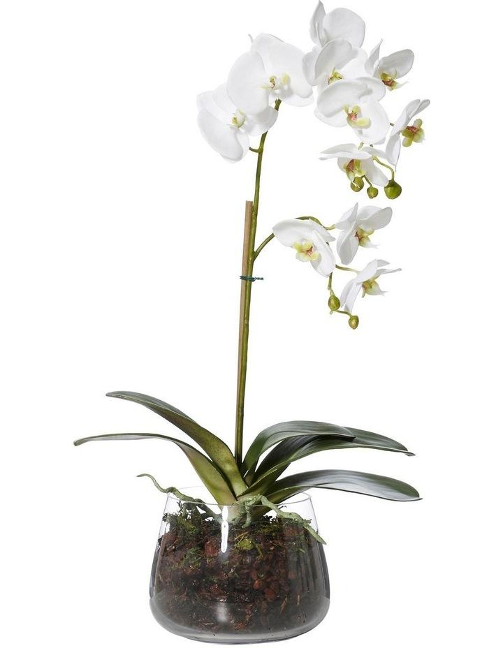Phalaenopsis-Round Bowl 235cm image 1