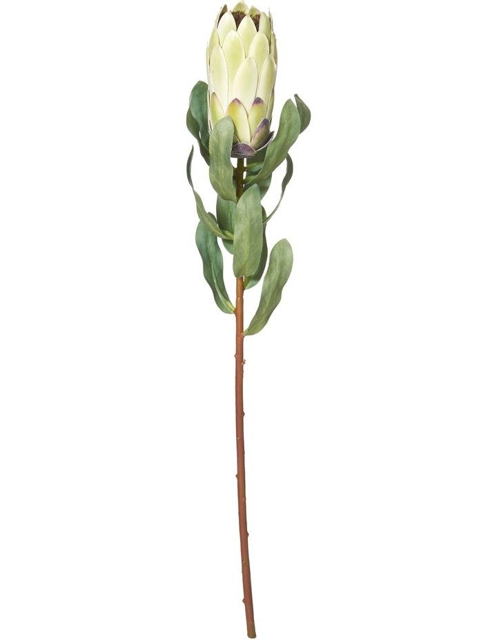 Protea Stem  10x10x55cm - Green image 1