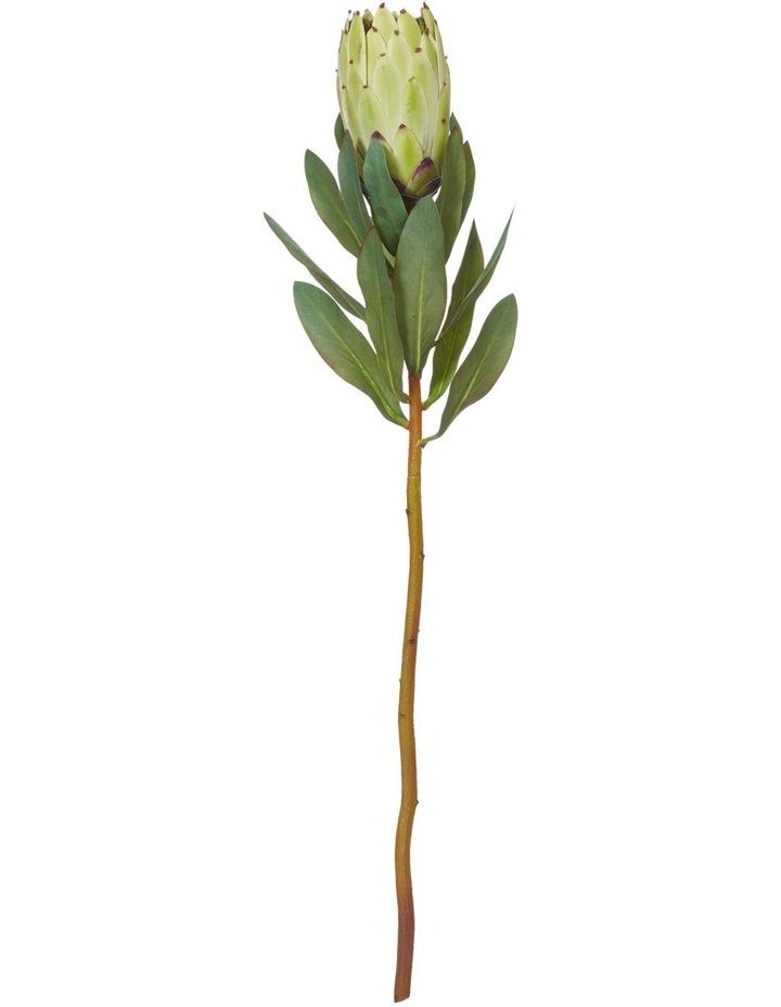 Light Green Protea Stem 11x65cm image 1