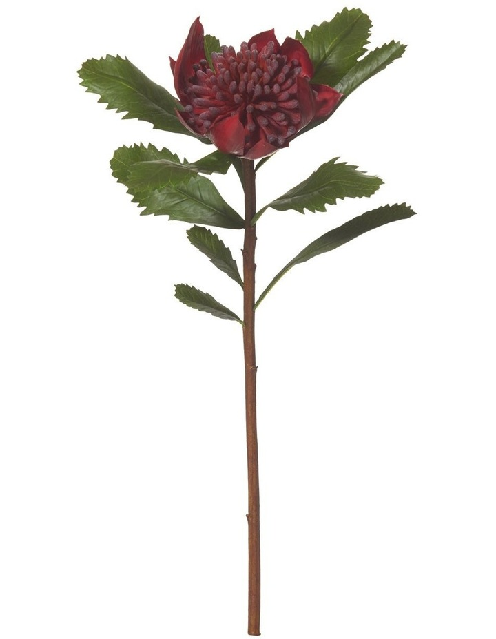 Rogue Waratah Stem Red 53cm image 1