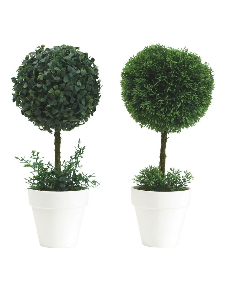 Topiary In White Terracotta Pot Assorted Individual 34cm image 1