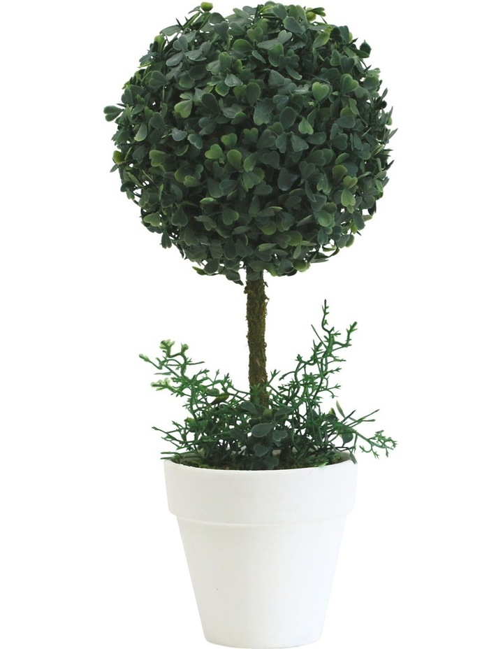 Topiary In White Terracotta Pot Assorted Individual 34cm image 2