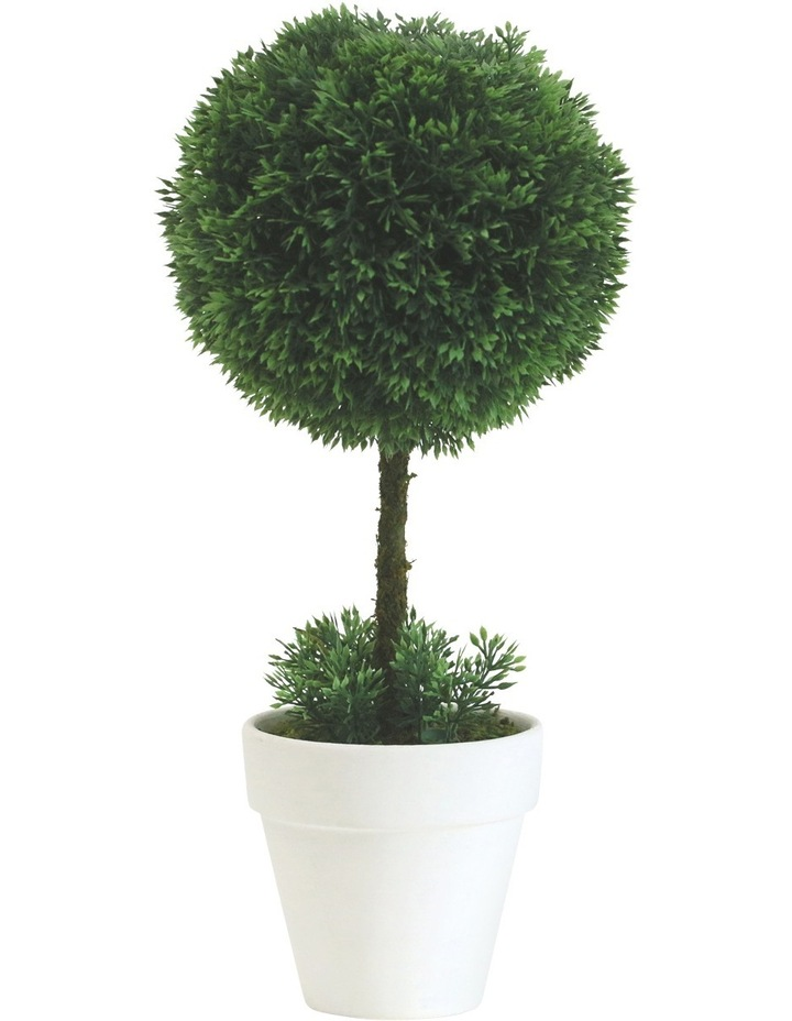 Topiary In White Terracotta Pot Assorted Individual 34cm image 3