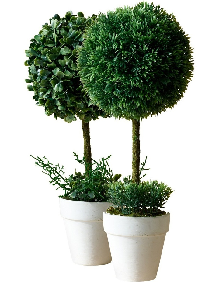 Topiary In White Terracotta Pot Assorted Individual 34cm image 4
