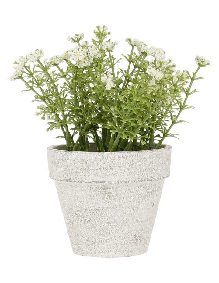 White Flowers in Pot 16.5cm image 1