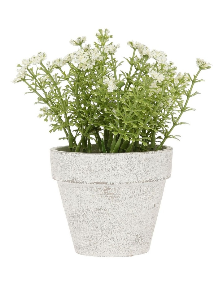 White Flowers in Pot 16.5cm image 1
