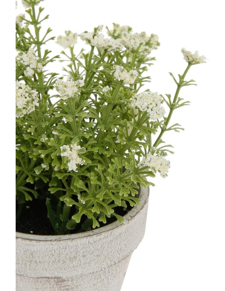 White Flowers in Pot 16.5cm image 2