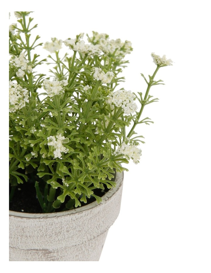 White Flowers in Pot 16.5cm image 2