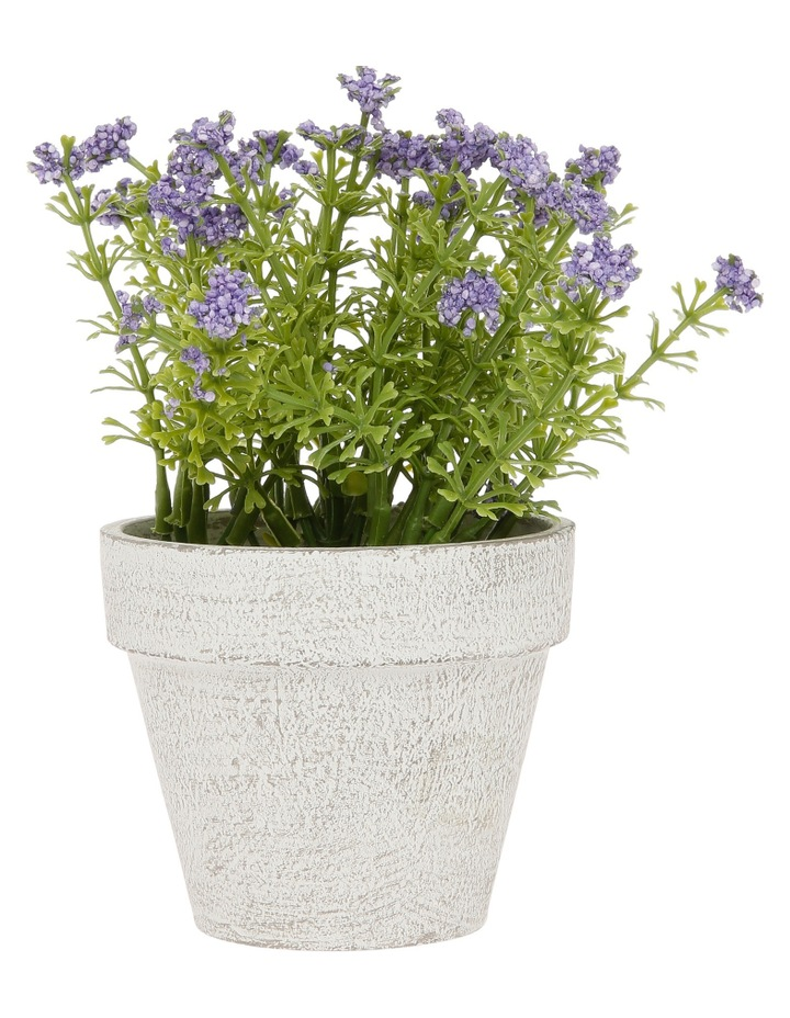 Lilac Flowers in Pot image 1