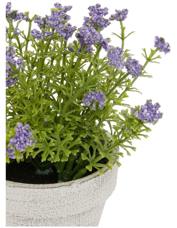 Lilac Flowers in Pot image 2