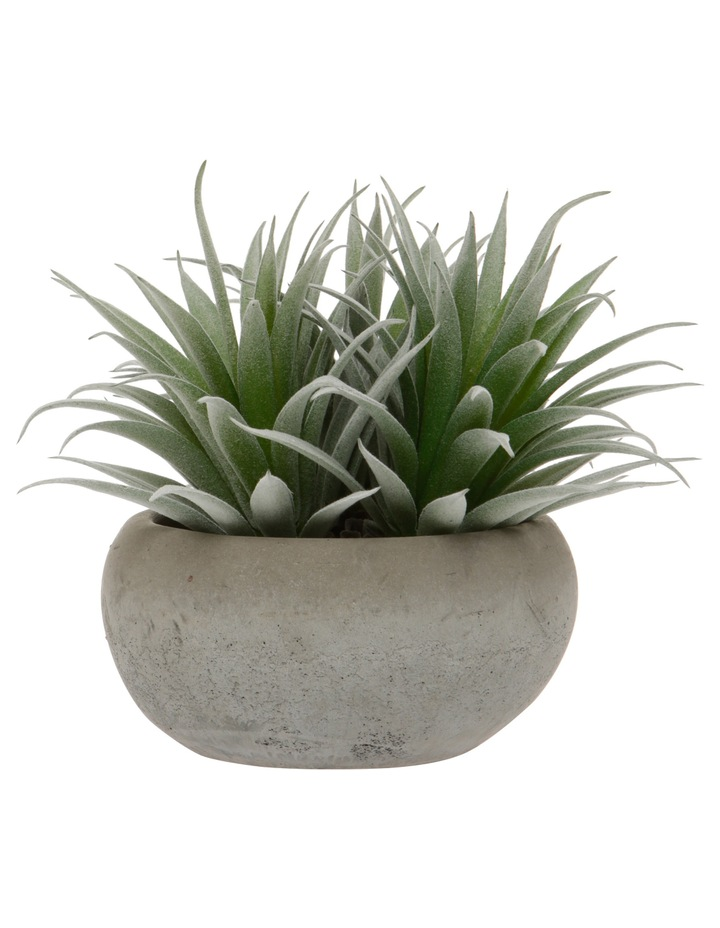 Flocking Agave in Cement Pot Large 15cm image 1