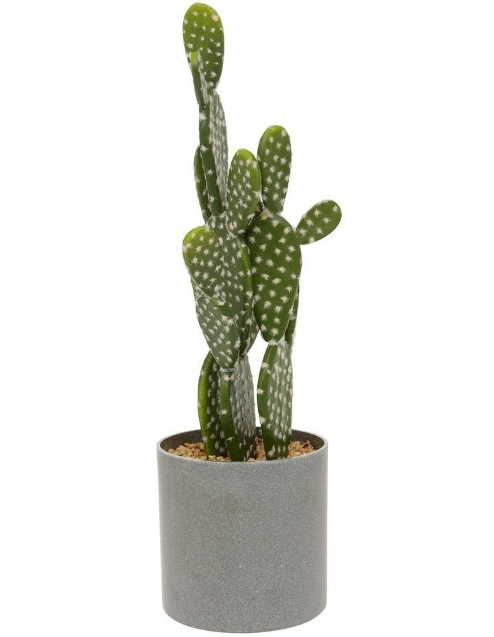 Tall Cactus in Plastic Pot 52cm image 1