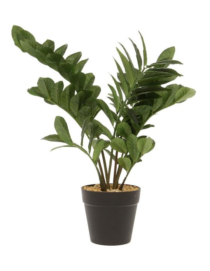 Araceae Plant in Plastic Pot 36cm image 1