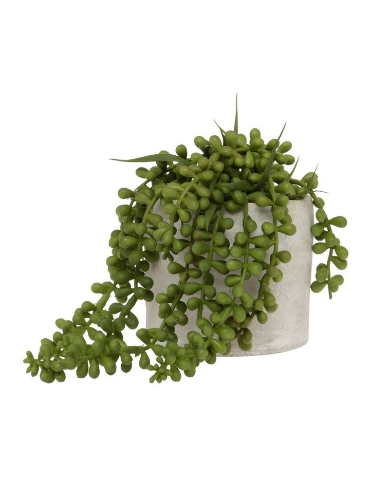 String of Pearls in Cement Pot 15cm image 1
