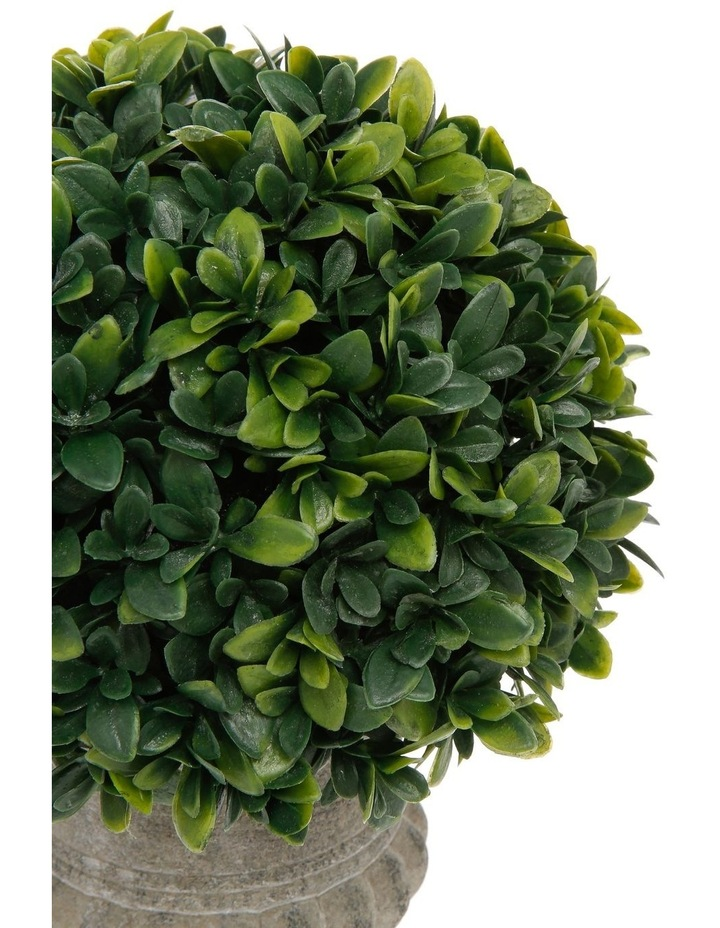 Tea Leaves Topiary in Decorative Urn 25cm image 2