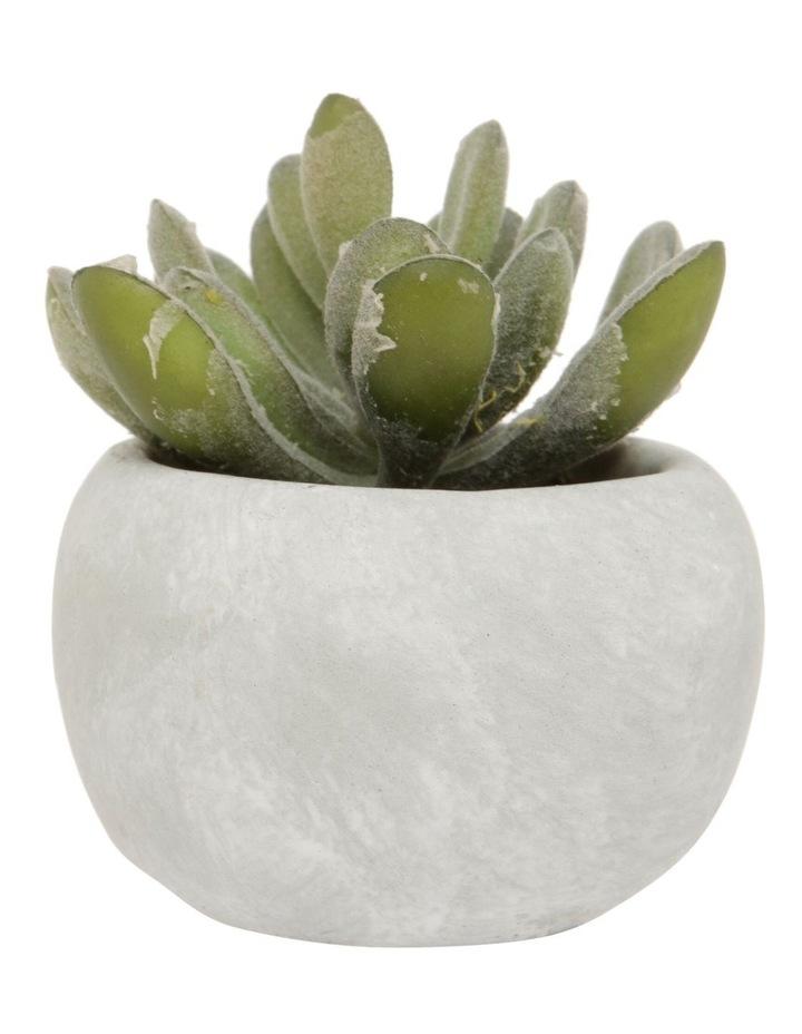 Mini Blue Succulent with Round Cement Pot image 1