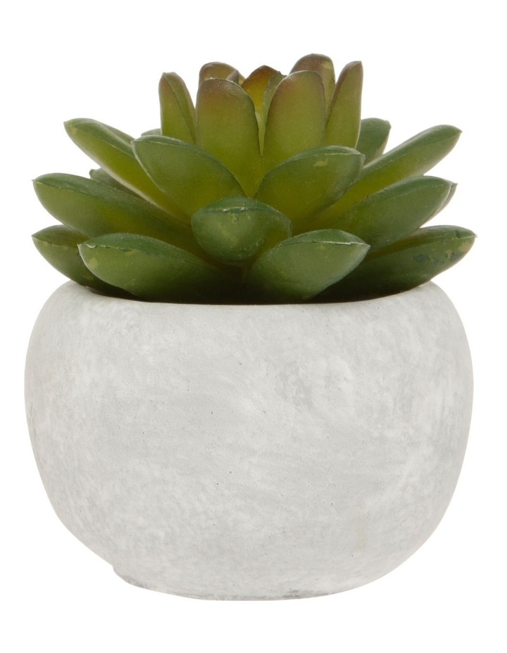 Mini Ruby Blush Succulent with Round Cement Pot image 1
