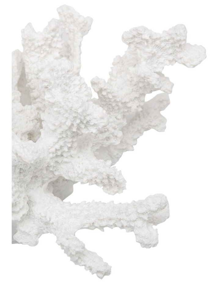 Resin Staghorn Coral in White image 2