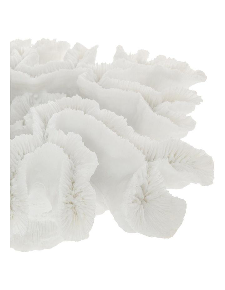 Resin Diploria Coral 35cm image 2