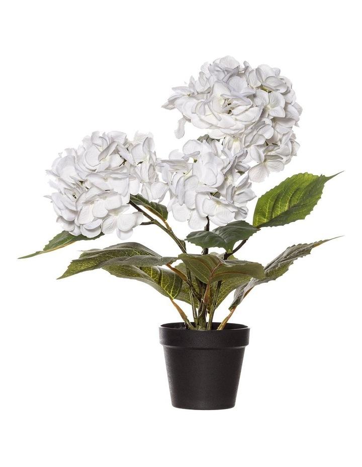 Hydrangea Bush in Garden Pot 48cm White image 1