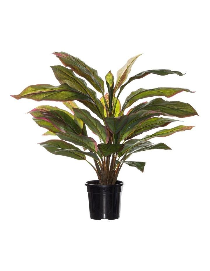 Rogue Cordyline Bush in Garden Pot Green 55cm image 1