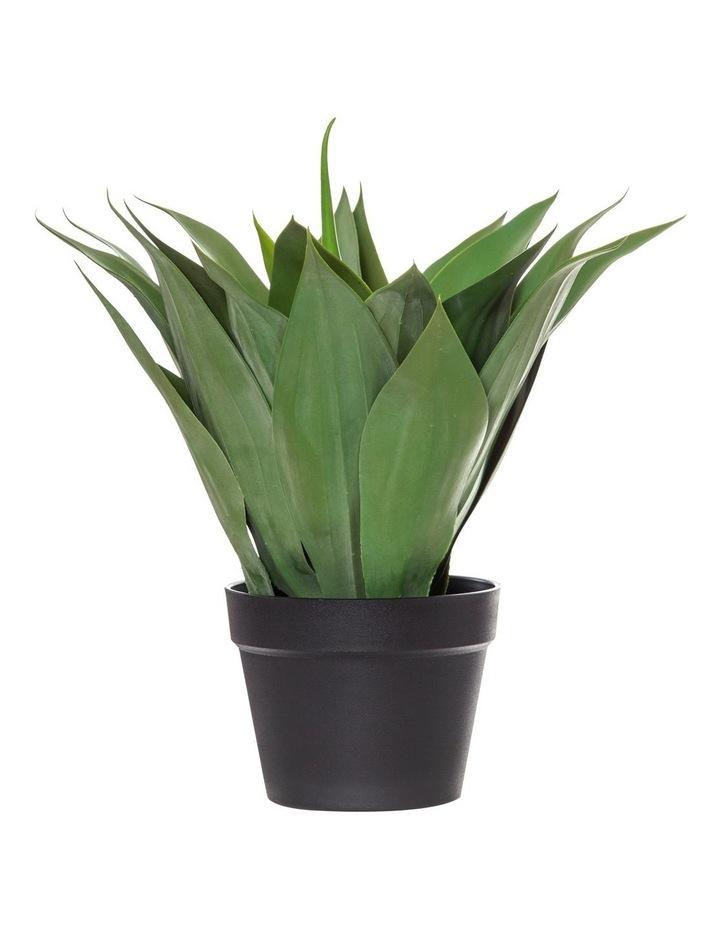 Rogue Agave in Garden Pot image 1