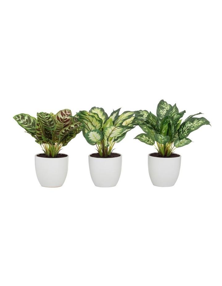 Rogue Indoor Plant 3 Asst 28cm Variegated image 1