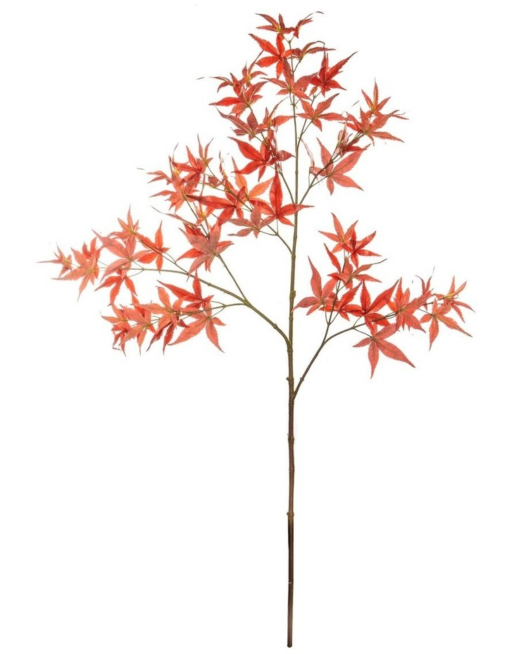 Japanese Maple Spray Red 90cm image 1