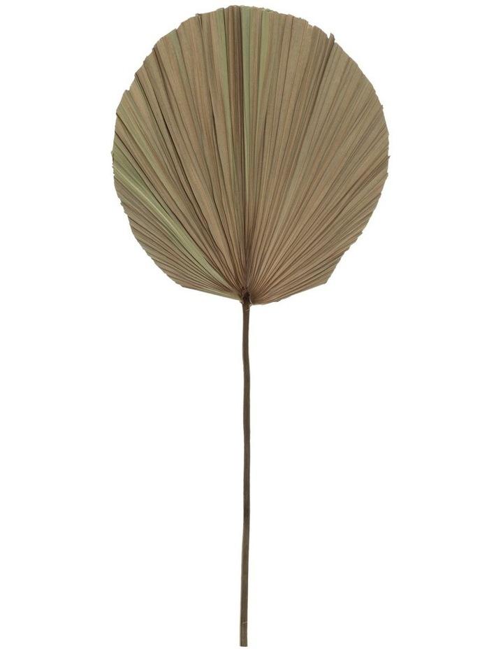 Dried Cut Fan Palm Stem 73cm image 1