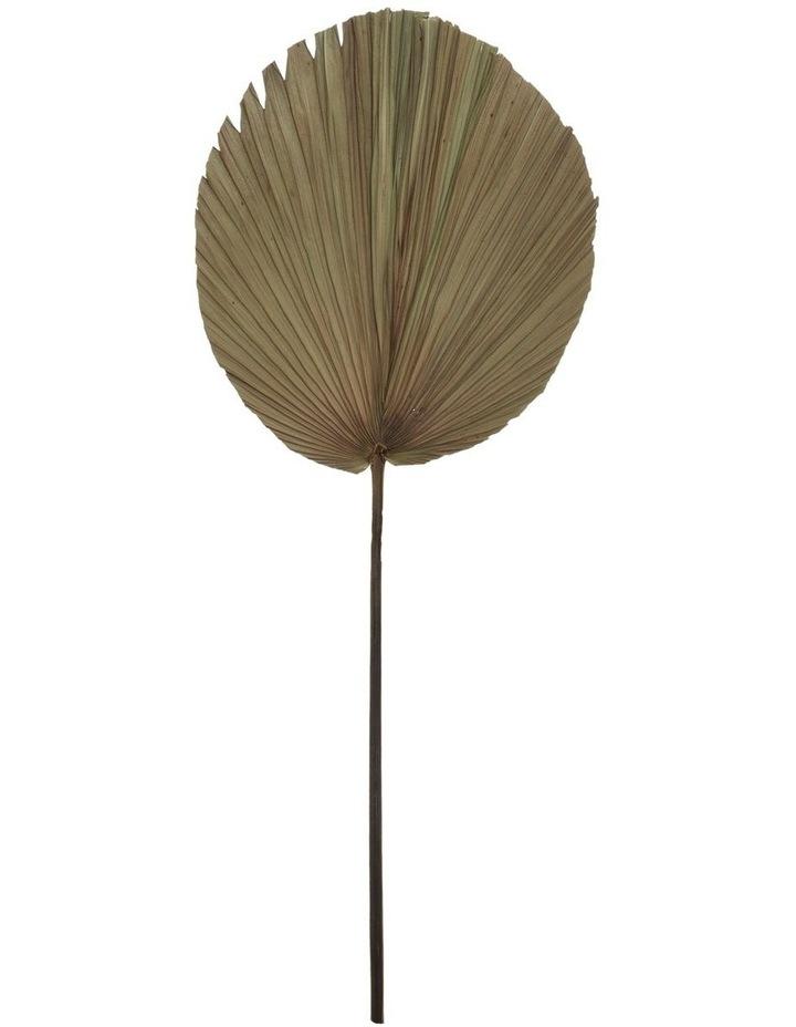 Dried Cut Fan Palm Stem 90cm image 1