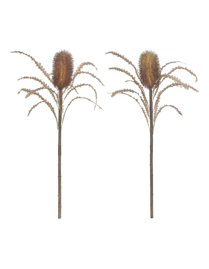 Rogue Dried Banksia Stem 2 Asst image 1