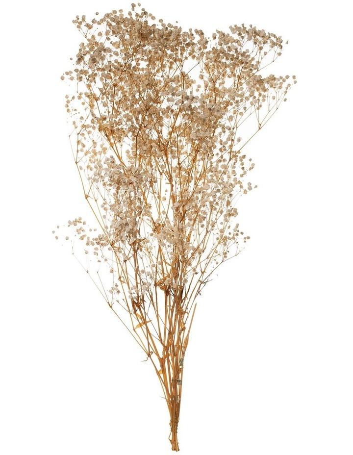 Preserved Gypsophila 65cm Natural image 1