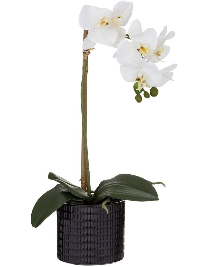 Butterfly Orchid in Black Pot 48cm White image 1