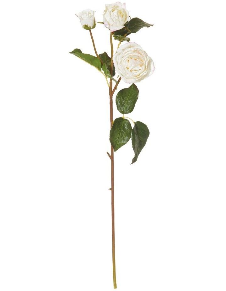 Ecuadorian Rose Cream 52cm image 1