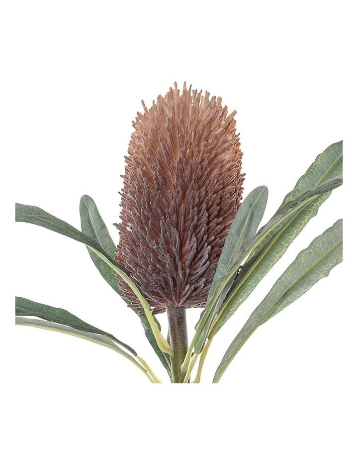 Banksia Cone Stem image 2