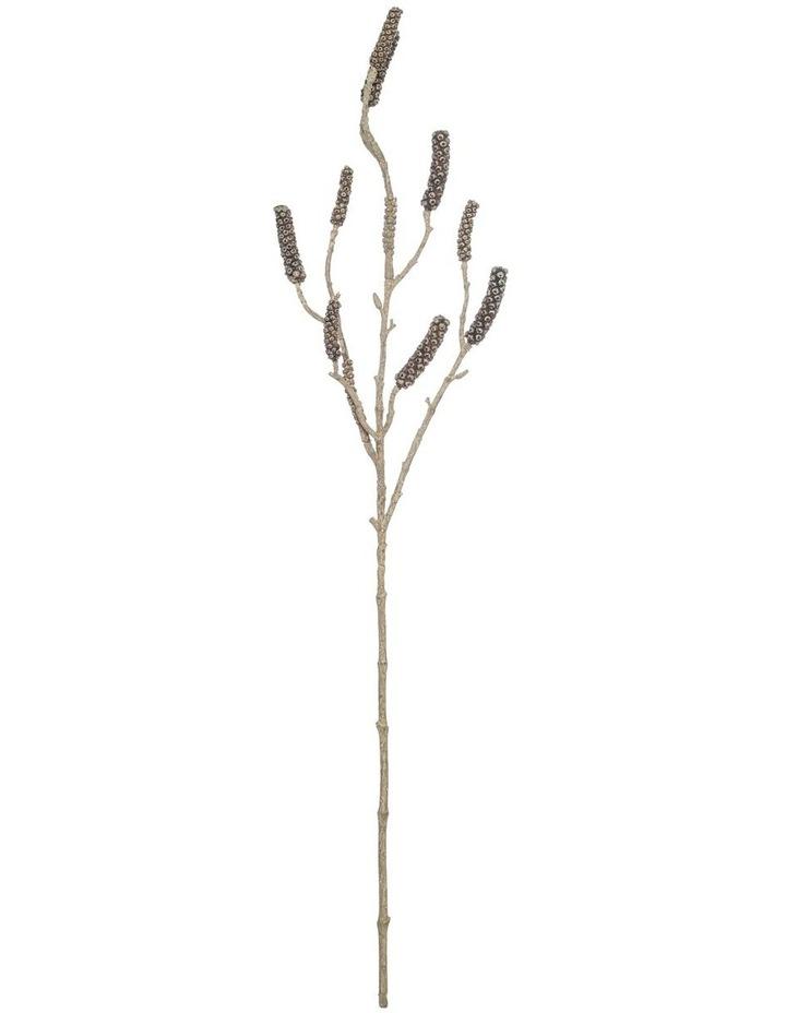 Callistemon Branch image 1