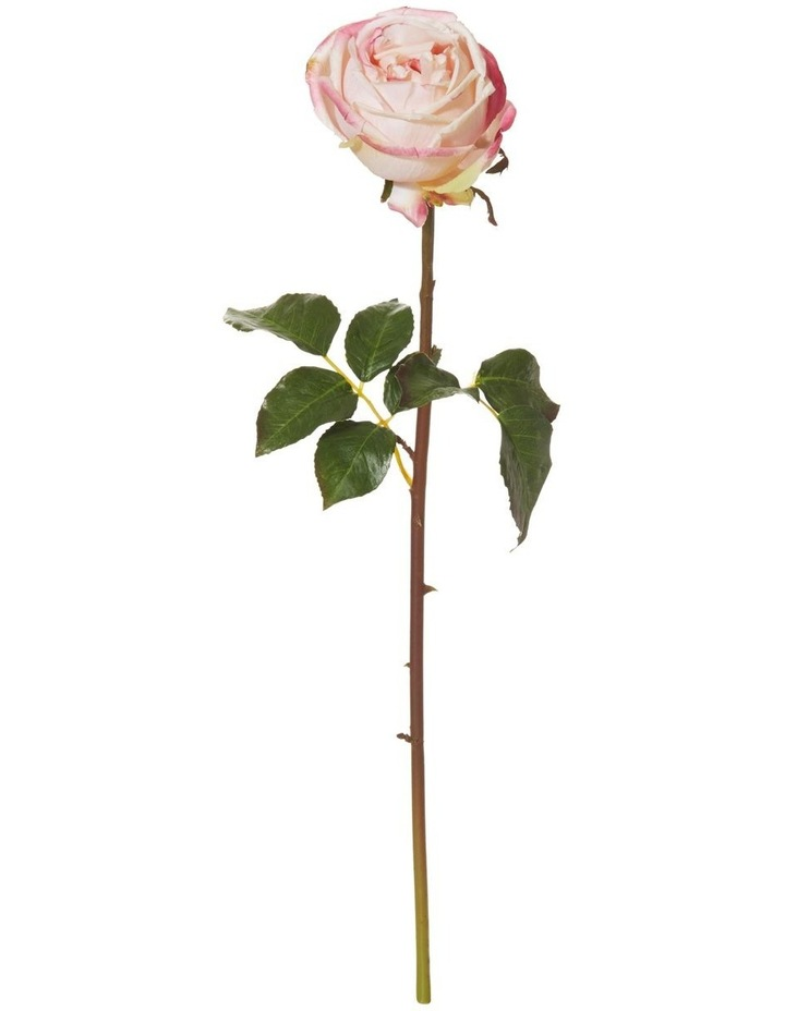 York Rose Stem 13x25x52cm Dar image 1